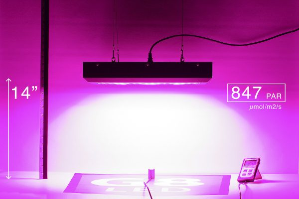 G8LED 450W Bloom PAR at 14 inches