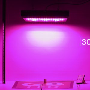 G8LED 450W Bloom PAR at 24 inches
