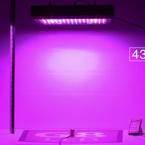 G8LED 450W PAR at 24 inches