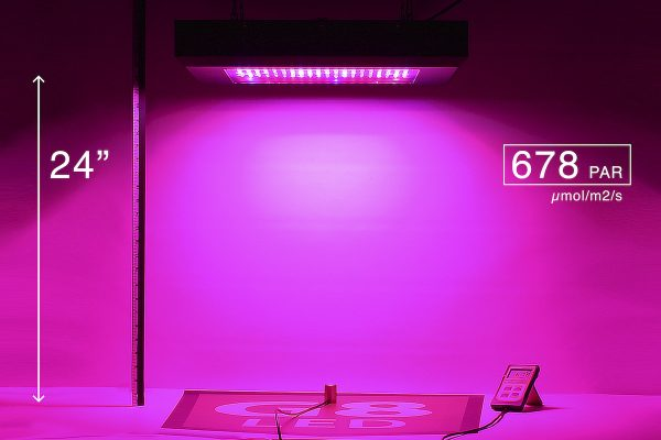 G8LED 600W Bloom PAR at 24 inches